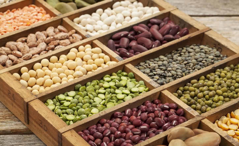 Jakie produkty roślinne są bogate w białko?